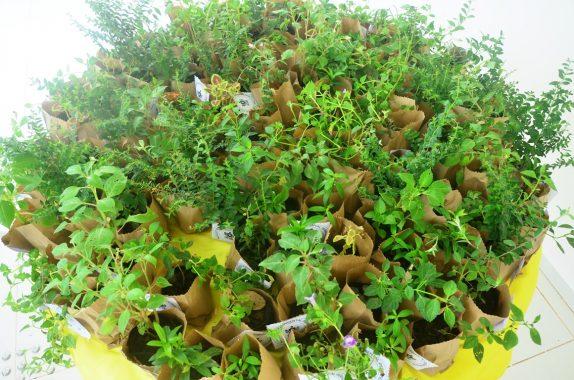 Foto de cima de uma mesa redonda com várias plantinhas sobre a mesa.